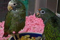 bird-paradise-palooza-2o