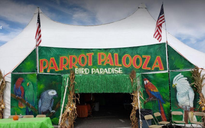Bird-Paradise-palooza-2019