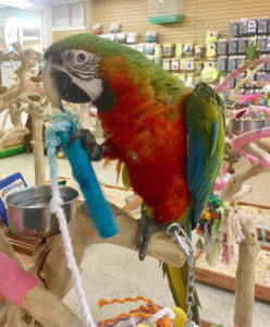 macaw parrot foraging image